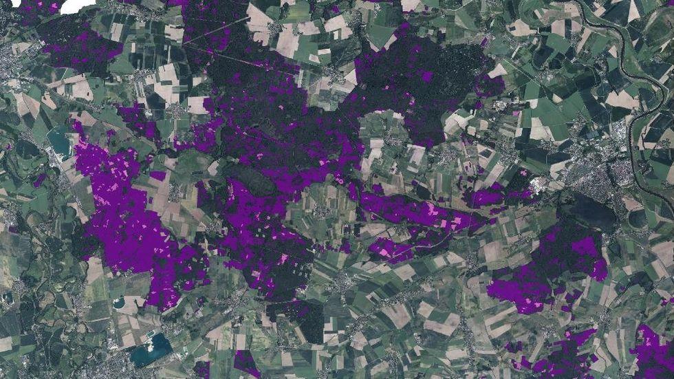 Region Nordsachsen: Waldschadens- (lila) und Freiflächen (rosa) in Nordsachsen (Stadt Eilenburg unten links im Bild, Stadt Torgau rechts)
